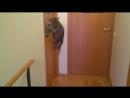 Даже кот готовится к лету 😂😄😆 #virusvideo Отмечай друзей под видео👍🏼 Подписывайся на @virusvideo