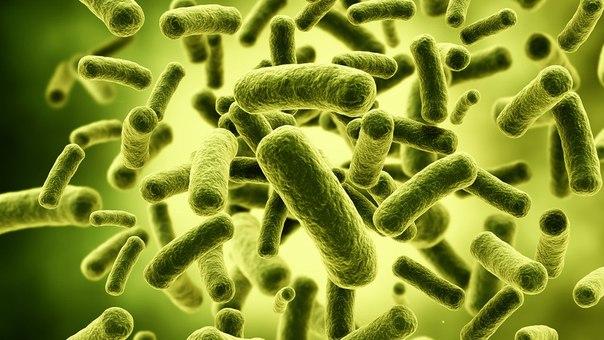паразиты внутри человека