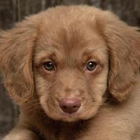 фото няшных собачек