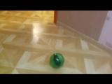 Хомяк в шаре )