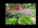 Цветы в саду. Слайд-шоу из фото