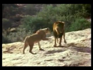 Невероятная история дружбы и любви людей и льва