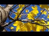Христианская песня Осень