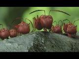 Букашки  Приключение в Долине муравьев 2014