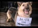 Грустное видео про собак