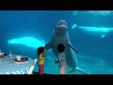 Beluga whales and 2 kids
