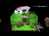 The Art of the Planted Aquarium 2015 - Scaper's Tank (Nano) category, part 5