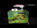 The Art of the Planted Aquarium 2015 - Scaper's Tank (Nano) category, part 6