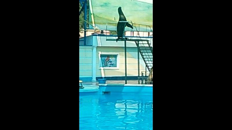 дельфинарий п. Небуг