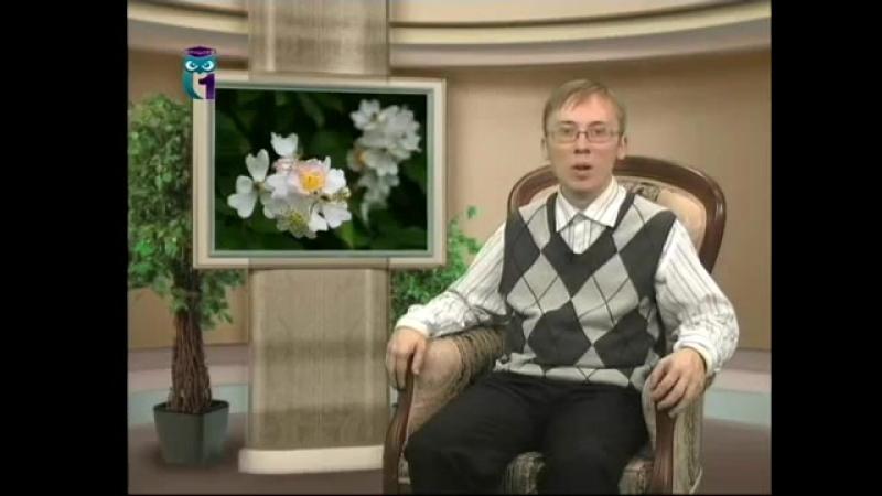 Цветы. Передача 2. Старинные и чайно-гибридные розы