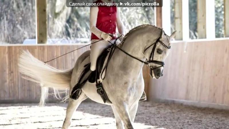 «Со стены Horses are our lifestyle [HAOL]» под музыку Гимн конного спорта - - конный спорт. Picrolla