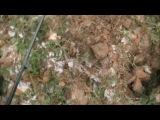 Поиск старинных монет в историческом месте! №61