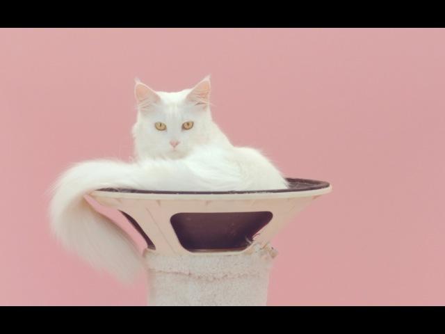 De Jeugd Van Tegenwoordig - Manon (NED)