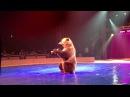 Медведь Тима. Цирк Фестиваль