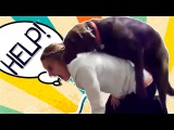 ������ ����� ����� � ������! �����!!! Dogs Want SEX With People! Funny Moments!!!