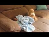Щенок пытается укрыть малыша одеялом. Так мило!