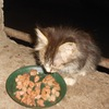 Кошки нашего двора - SOS!!!