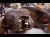 Странное существо в подмосковном лесу, Необъяснимо но факт 094, передачи и документальные фильмы