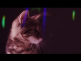 Meow Mix Song - EDM Cat Remix by Ashworth