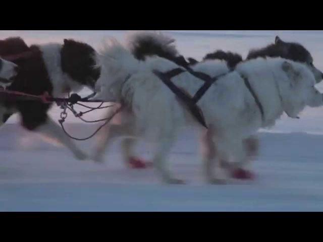 Dog Sledding in Yakutsk, Siberia Russia - Катание на собачьих упряжках в Якутии