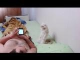 Полный ржач, кот патриот слушает гимн России, лучшие приколы над животными 2015