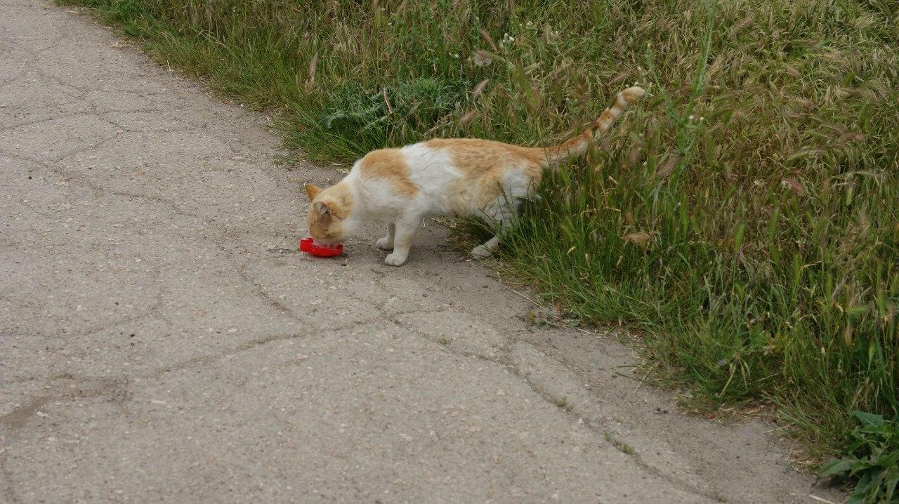 тарханкутский кот