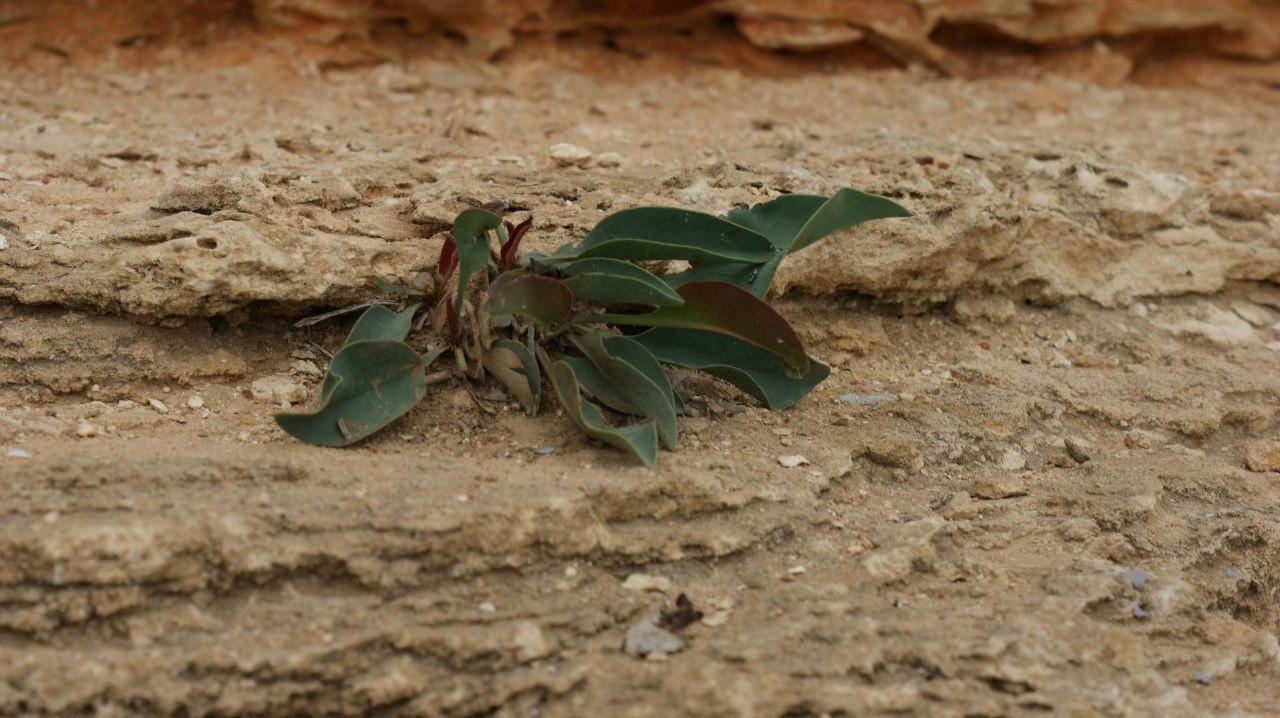 растение из камня