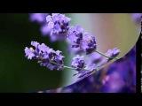 MOZART - PIANO CONCERTO Nr 21 - Andante (