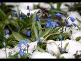 Антонио Вивальди (Времена года) - Весна