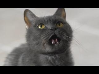 Реклама МегаФон - Переходи на Ноль 2015 (Злой кот)