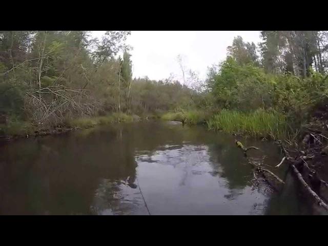 Летающая форель - Flying trout