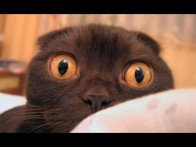 Коты против огурцов   Cats vs cucumbers 2015