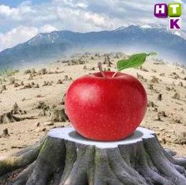 Апорт возвращается! Два друга-программиста решили возродить легендарный сорт яблок.