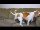 Dog Saves Sister from Alligator Puppet_ Cute Dogs Maymo Penny