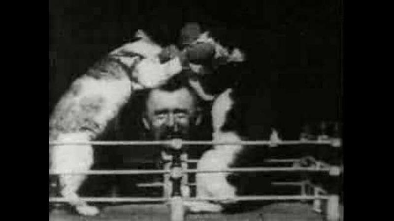Thomas Edison - 1894 Boxing cats