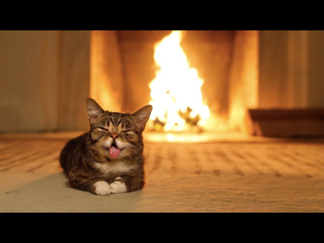 Lil BUB's Magical Yule LOG Video