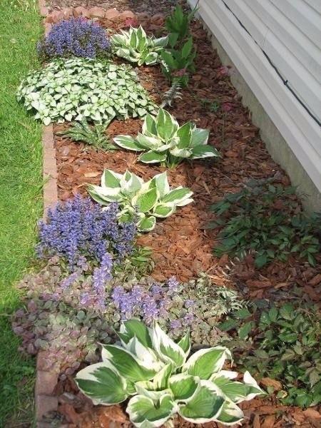 Яснотка в дизайне сада