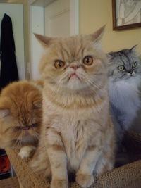 Картинка злобных котов
