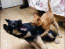 САМЫЕ СМЕШНЫЕ КОТЫ! ПРИКОЛЫ С КОТАМИ 2014! Прикольный кот смешной!