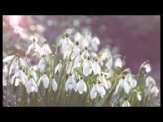 Подснежники Весна без смс