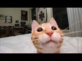 Funny and cute animal compilation 2015