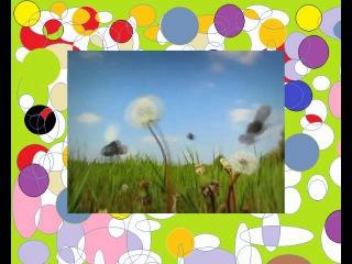 Насекомые букашки 01 Божья коровка