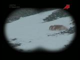 Охота на барана Марко Поло в горах Тянь-шаня   Горная охота с Эдуардом Бендерским