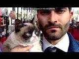 Со стены Grumpy Cat - Недовольная Кошка Тард под музыку TON!C feat. Erick Gold - Lead The Way. Picrolla