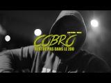 COBRO - Rentre Pas Dans Le Zoo Clip by Five Collectif