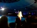 Выступление дуэта скрипачек в Минском дельфинарии Немо. 08.08.2015
