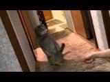Кот удивился звонку в дверь