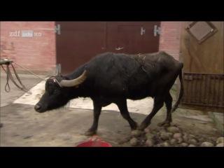 (Doku) Die Büffelranch: Leben und Arbeiten auf einem Bio-Bauernhof - Miss Germany ist krank [HD]