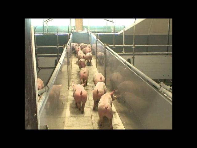 Ein Schweinestall entsteht Folge 12 Die ersten Ferkel kommen