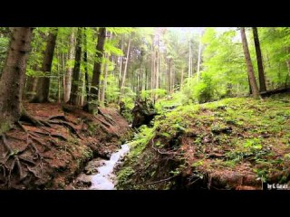 Carpathian Mountains Forest River - 1 Hour Relaxing - Full HD 1080p Nature and F...